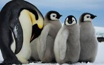 Nhiều loài động vật có nguy cơ biến mất vì biến đổi khí hậu