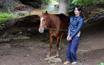 Bắt 3 đối tượng trộm ngựa