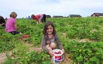 Du lịch nông nghiệp - chiêu mới hút khách ở Canada