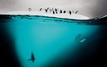 Sách ảnh về động vật hoang dã đầy ấn tượng
