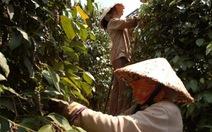 Mỗi sản phẩm nông nghiệp sẽ được cho vay riêng