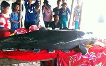 Cá heo vướng dây chết ở biển Phú Quốc