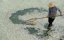 Trung Quốc: 30 tấn cá chết trắng trên sông