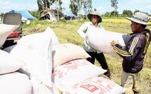 Nhà nước sẽ kiểm soát doanh nghiệp xuất khẩu gạo