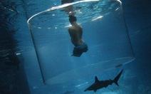 Nick Vujicic bơi cùng cá mập