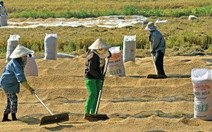 Đâu là lợi ích lâu dài thật sự của nông dân trồng lúa?