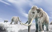 Voi mamút tuyệt chủng vì biến đổi khí hậu