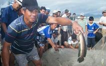 Sau bão, ra biển bắt cá… nước ngọt