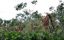 Đau đớn giữa rừng cao su
