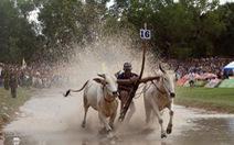Tưng bừng ngày hội đua bò Bảy Núi