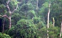 Phá rừng phòng hộ xây thủy điện