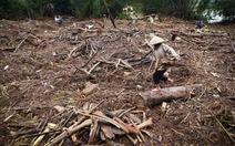 """""""Lũ gỗ"""" ngập tràn bên bờ sông Ngàn Phố"""