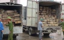 Bắt hai xe gỗ lậu từ rừng phòng hộ đầu nguồn