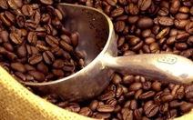 Cà phê robusta Việt Nam có giá trở lại