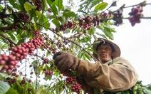 Cà phê VN hấp dẫn các nhà đầu tư nước ngoài
