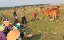 Một sào lúa  mua được hai bát phở, nông dân trả ruộng