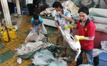 Phát hiện gần 2 tấn thịt dê, cừu chưa kiểm dịch