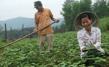 Vườn cây thuốc nam ở Phú Lâm