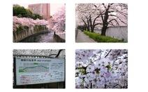 Kandagawa - dòng sông đã đi vào thi ca Nhật Bản