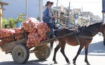 Vó ngựa vùng rau