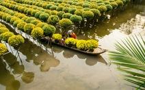 Thành phố hoa miền sông nước