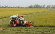 Vốn ngoại vào chuỗi sản xuất lúa gạo