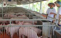 Chăn nuôi bằng thức ăn ngoại nhập