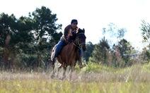 Ngựa thồ Lang Biang thành ngựa đua trong lễ tình nhân