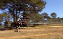Ngựa du lịch tranh tài trên đường đua