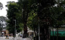 Tráng ximăng bít gốc cây xanh