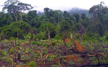 """Rừng bị phá nát, GĐ khu bảo tồn xin nhận """"cảnh cáo"""""""