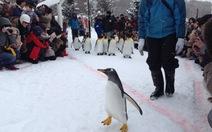 Đến Hokkaido xem chim tập thể dục