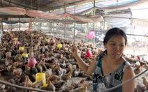 Người nuôi gà ngồi trên đống nợ