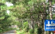 Rừng Măng Đen bị xâm hại nghiêm trọng