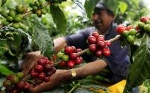 Giá tăng, nông dân bán 55% sản lượng vụ mùa cà phê