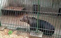 """Croatia đóng cửa """"sở thú như một nhà tù động vật"""""""