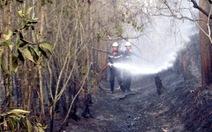 Dập tắt đám cháy rừng tràm ở Bình Chánh
