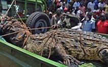 Bắt sống cá sấu nặng 1 tấn ăn thịt người