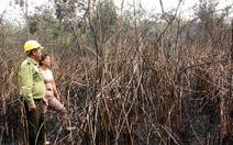Cháy rừng trồng keo lai 5-6 năm tuổi ở Khánh Hòa