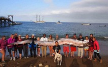 Ghi hình cá đai hiếm dài 17m ở vùng nước nông Mexico