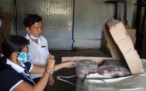 Phạt công ty nhập hơn 12 tấn thịt bò quá đát 50 triệu đồng