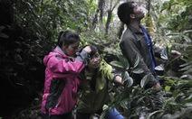 Xuyên rừng tìm thuốc quý