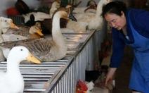 Ca tử vong đầu tiên do vi rút H5N6 là người Trung Quốc