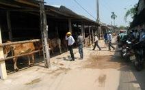 Chợ bò bên thành phố