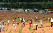Trồng 3.500 cây thông và mai anh đào bên bờ hồ Xuân Hương