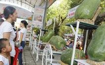 Bí đao nặng nửa tạ tại lễ hội trái cây hút du khách