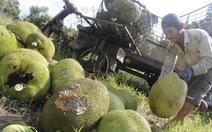 Giá trái cây giảm sâu, nhà vườn Đồng Nai, ĐBSCL khóc ròng