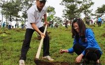 Trồng thêm 1.500 cây mai anh đào tại Đà Lạt