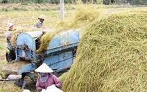 Bàn cách tăng thu nhập cho người trồng lúa