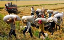 Mở rộng thị trường xuất khẩu gạo
